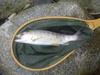 200705272